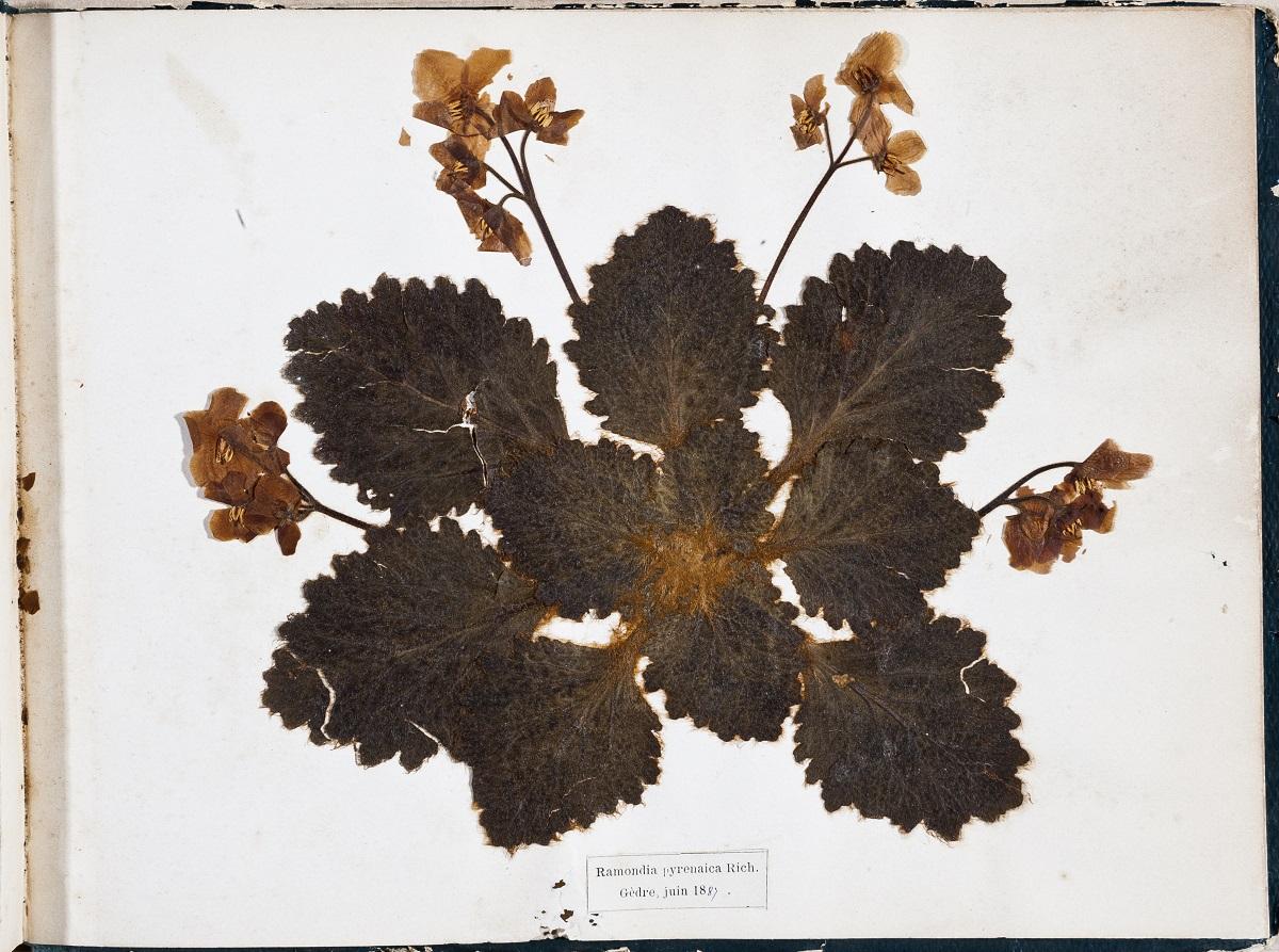 Herbiers et Botanistes - Pyrénées