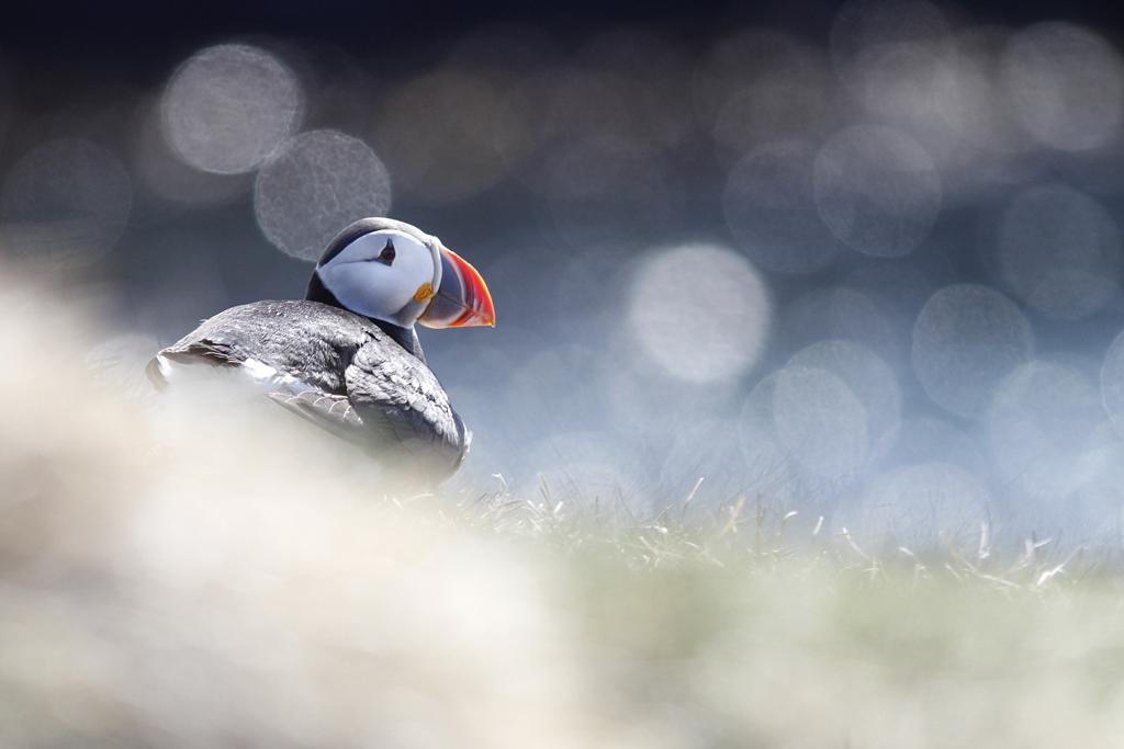 Voyage en famille en Islande © Phil Garcia