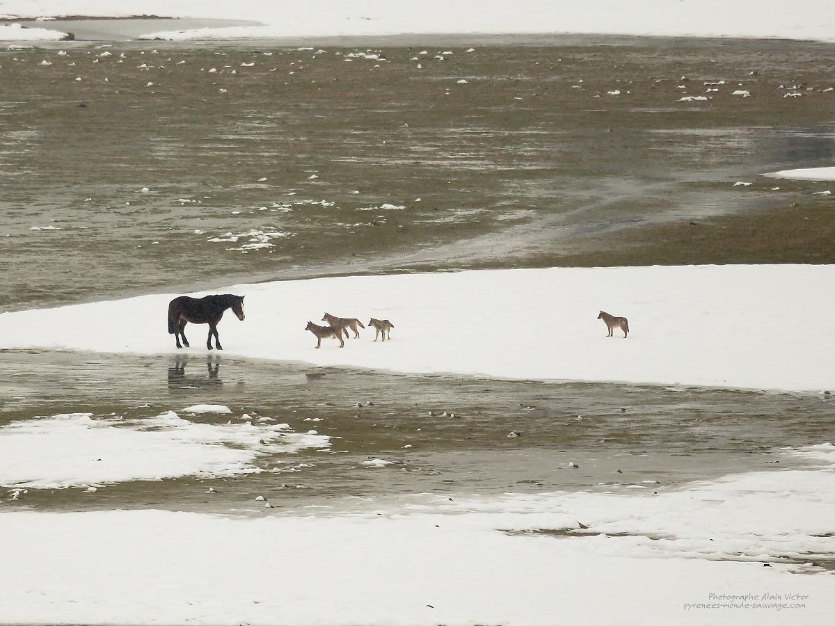 Dans l'Intimité des Abruzzes © Alain Victor