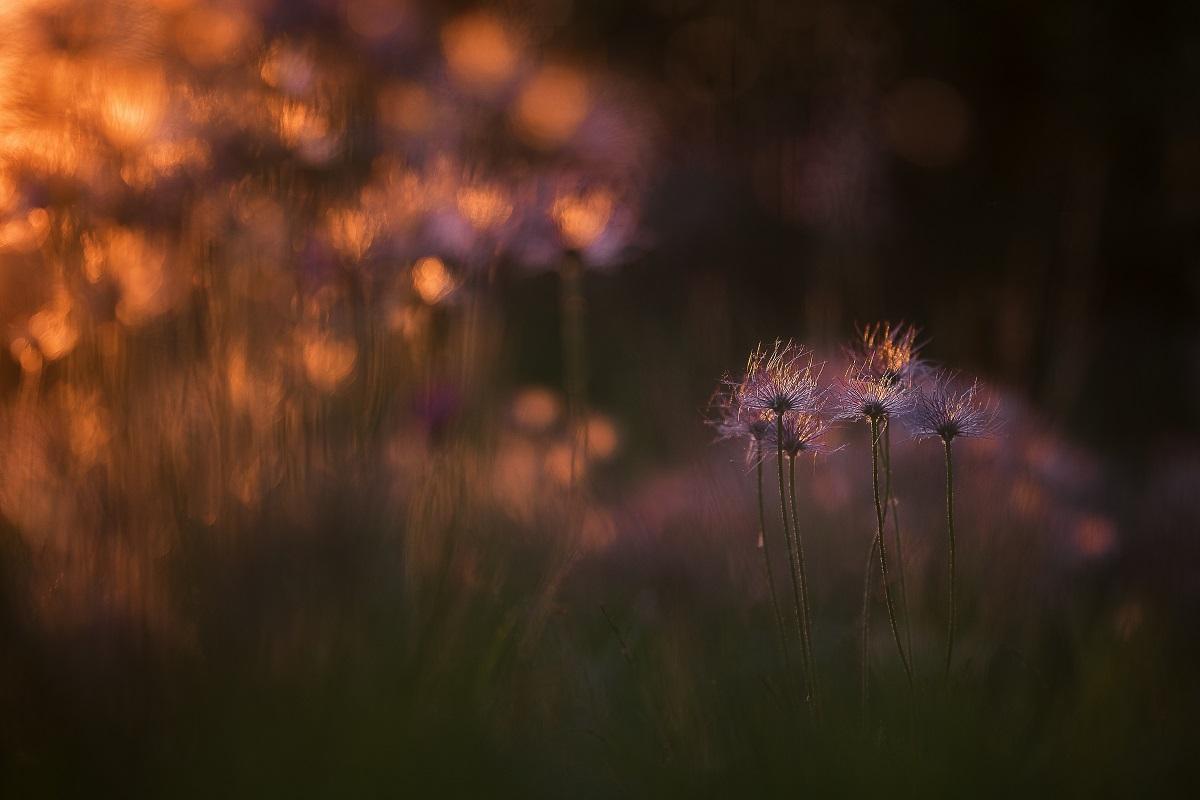 Poésie florale © Thomas Vanderheyden