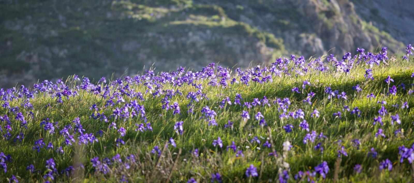 © P. Meyer - Parc national des Pyrénées
