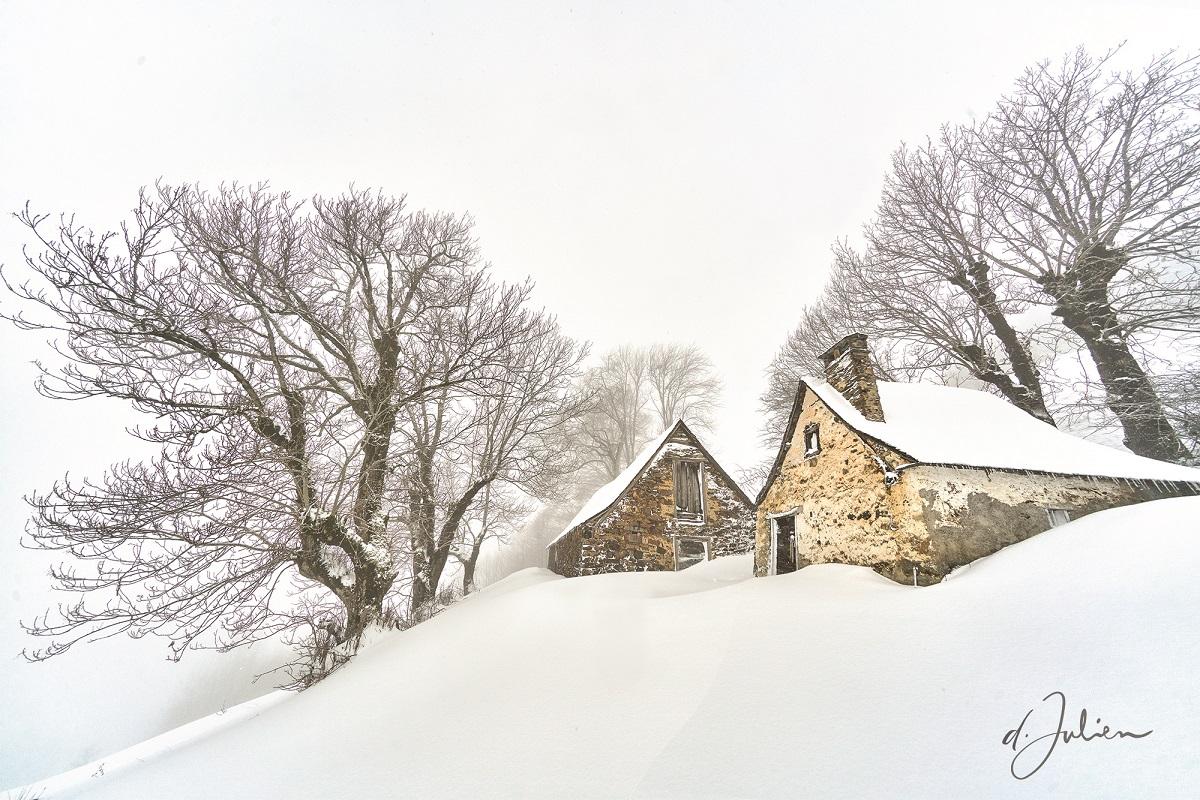 Blanc comme neige - Dominique Julien