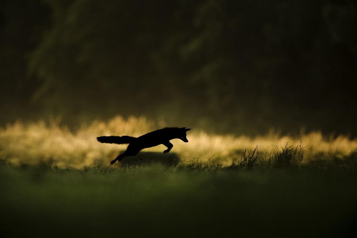 Bugey sauvage : un monde sous nos yeux © Joël Brunet