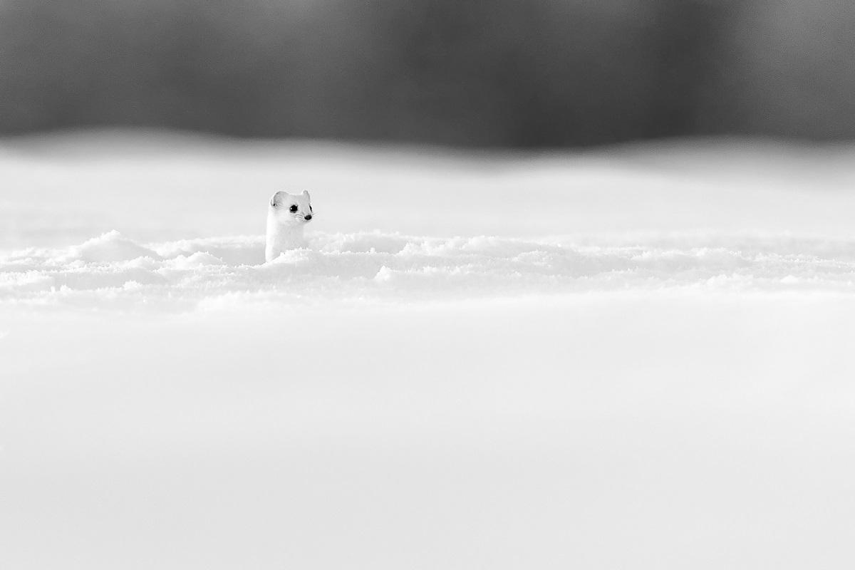 Nord et Blanc © Grégory Pol