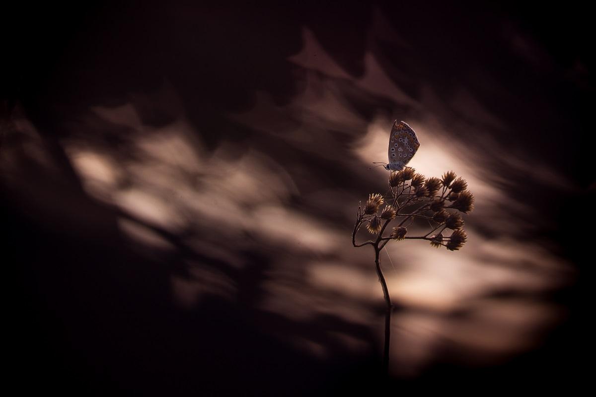 Nature mystérieuse © Lydie Bréda