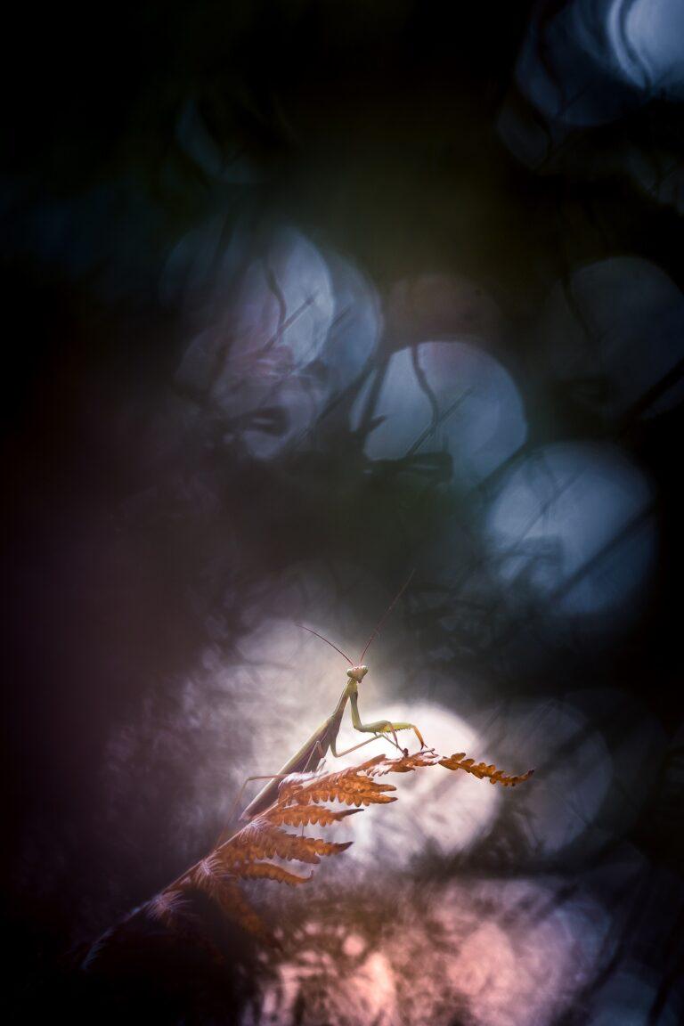 Nature mystérieuse- Extra terrestre © Lydie Bréda