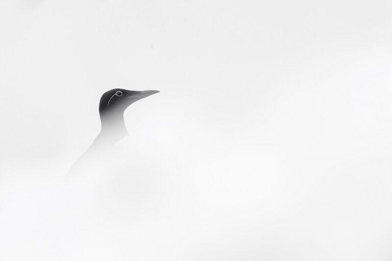 White Varanger © Patrick Delieutraz