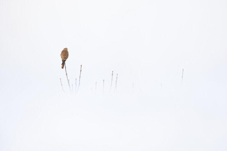 Âmes des cimes © Arnaud Saguer